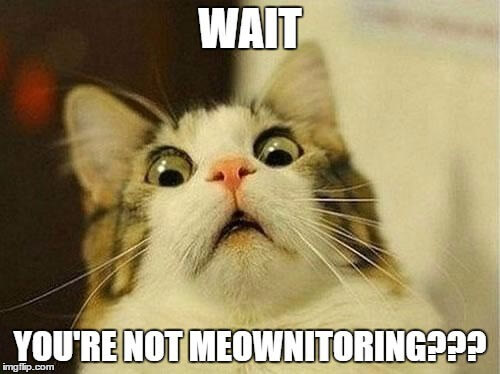 wait you re not meownitoring