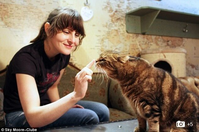 the first London's premier Cat Cafe and an Online store - Lady Dinah's Cat Emporium the first London's premier Cat Cafe and an Online store - Lady Dinah's Cat Emporium